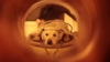 The Bond of Humans & Dogs revealed in an MRI