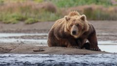 VIDEO: GMA 4/19: Alaska Wilderness Movie Follows Bear and Her Cubs