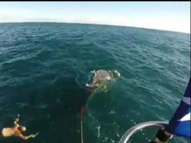 Watch: Fisherman Saves Baby Whale Tangled In Rope
