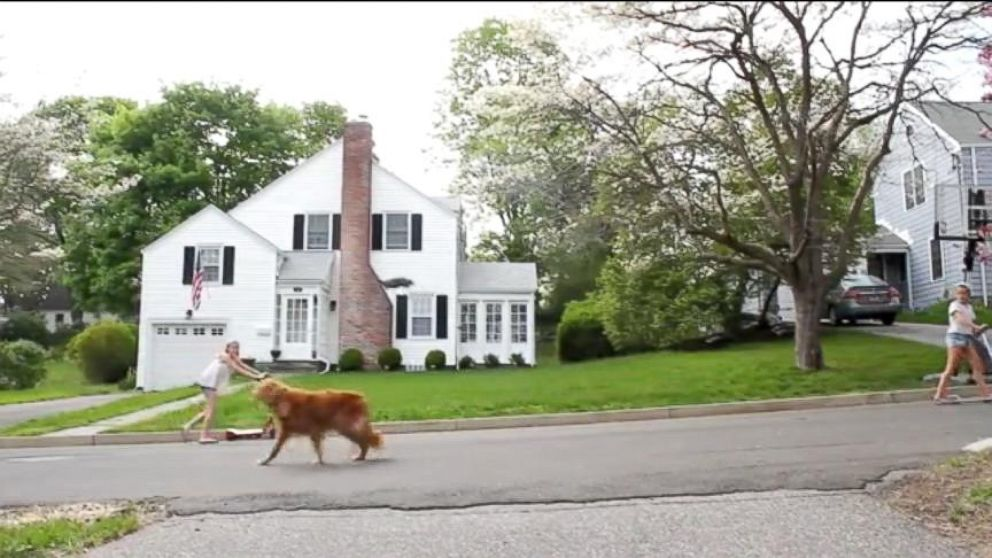 VIDEO: Drone Takes Dog For a Walk