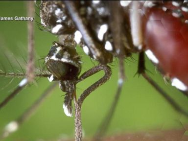 Watch: Rhode Island Latest to Report Case of Chikungunya Fever