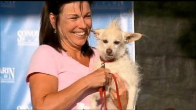 VIDEO: Hideous Pooches Fight for the Title of Worlds Ugliest Dog