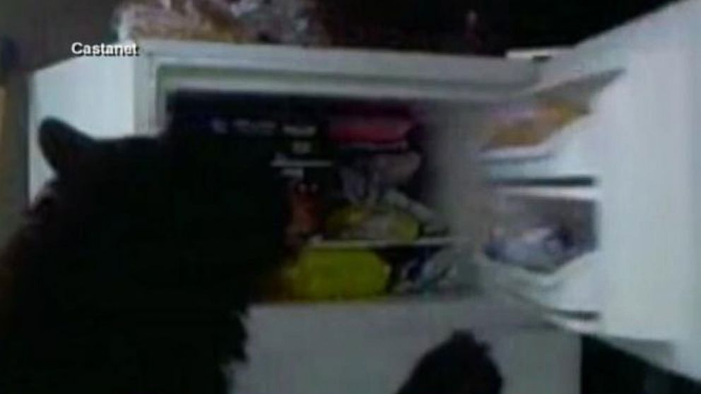 VIDEO: One couple got a serious surprise after setting up a hidden camera to see who had been looting in their freezer.