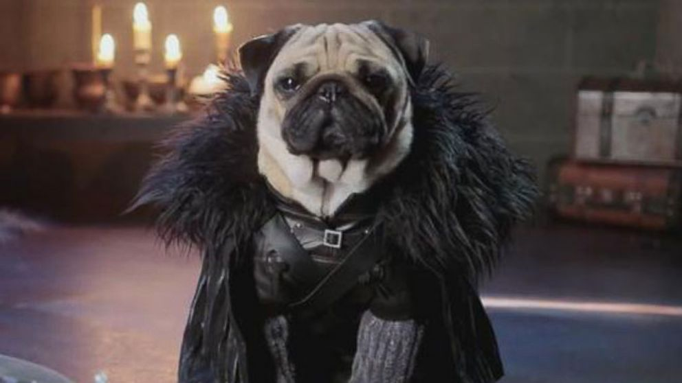 Pop News: Pugs in Costume Recreate 'Game of Thrones' Video ... Pug Game Of Thrones
