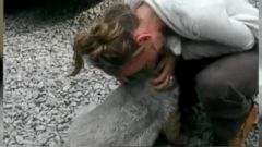 VIDEO: Dog Passes Out From Excitement of Being Reunited With Owner