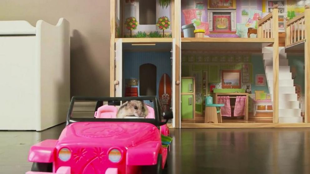 This hamster lives large in a tiny mansion video abc news for Cutest house in the world
