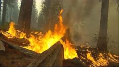VIDEO: GMA 9/19/14: Police Arrest Man for Allegedly Sparking King Wildfire
