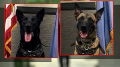VIDEO: Meet the Hero K-9s That Protect the President