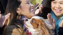 VIDEO: Nina Pham and Dog Bentley Back Together After Ebola Kept Them Apart