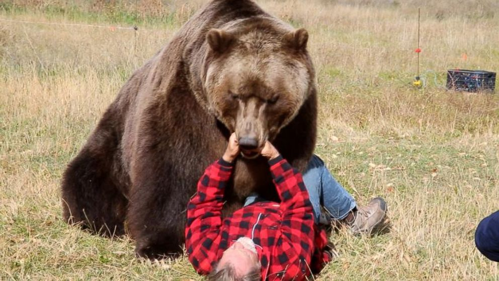 VIDEO: Tips to Survive a Bear Attack