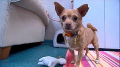 VIDEO: Eddie the Terrible Finally Finds a Home