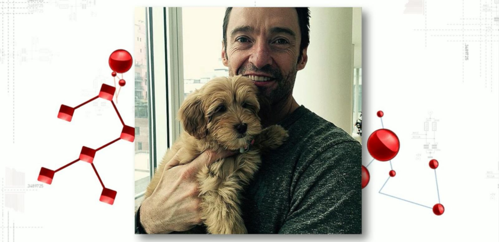 VIDEO: Huge Jackman Celebrates Christmas With New Puppy