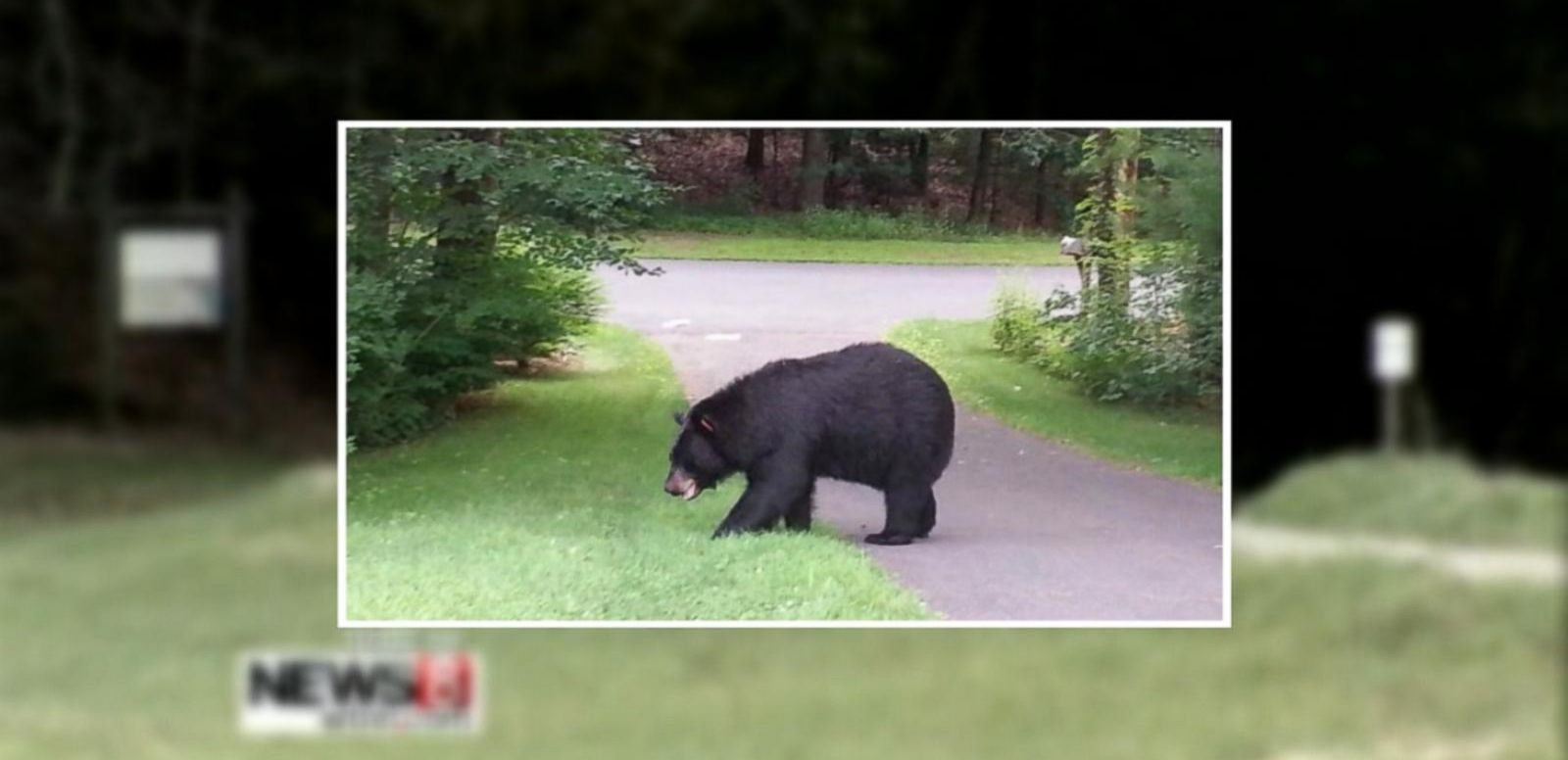 VIDEO: Connecticut Runners Chased by Dangerous Black Bear Dial 911