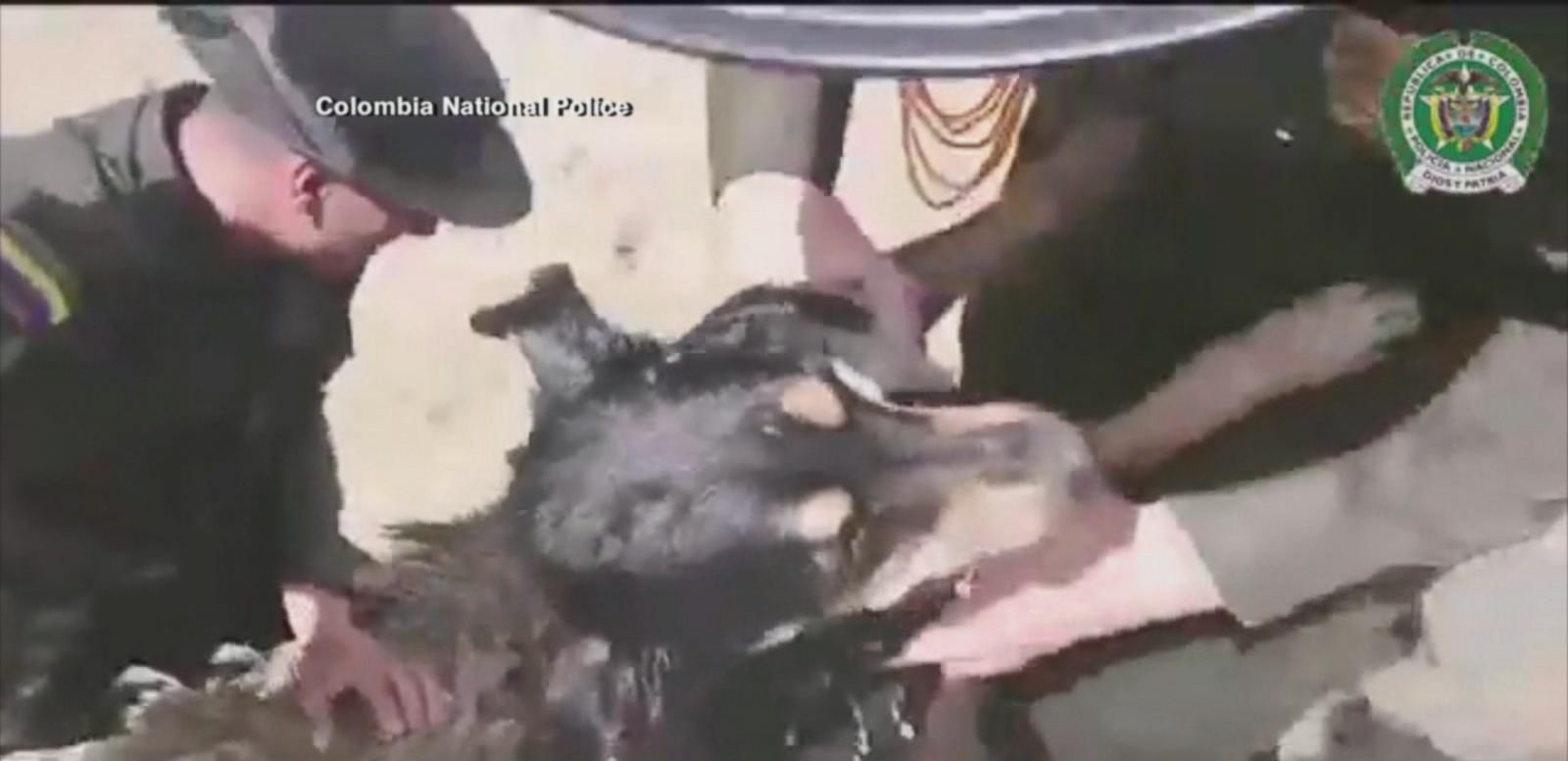 VIDEO: Video Captures Dog's Amazing Rescue From Rushing Waters