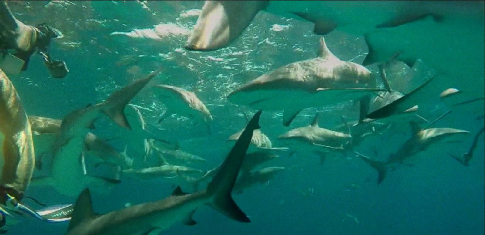 VIDEO: Increased Shark Sightings May Impact Summer Beach Season