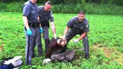 VIDEO: Details Emerge About Recapture of NY Prisoner David Sweat
