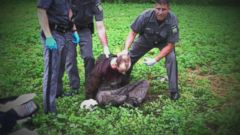 VIDEO: Multiple NY Prison Officials Suspended After Escapee David Sweat Talks