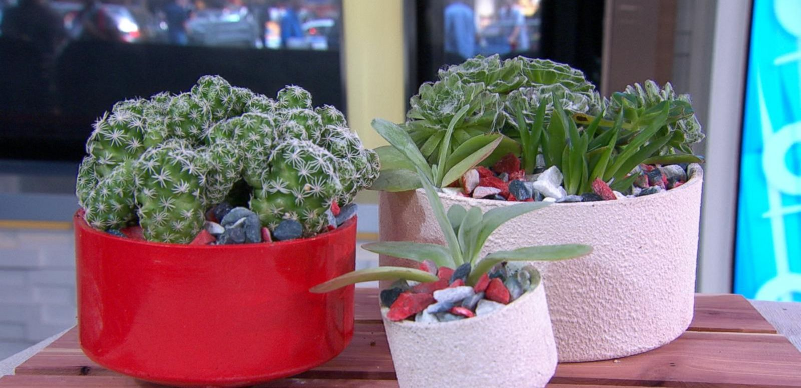 VIDEO: How to Make a Patriotic Planter