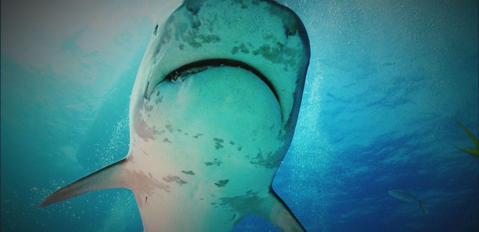 VIDEO: Concerns Over Jump in Shark Attacks in Carolinas