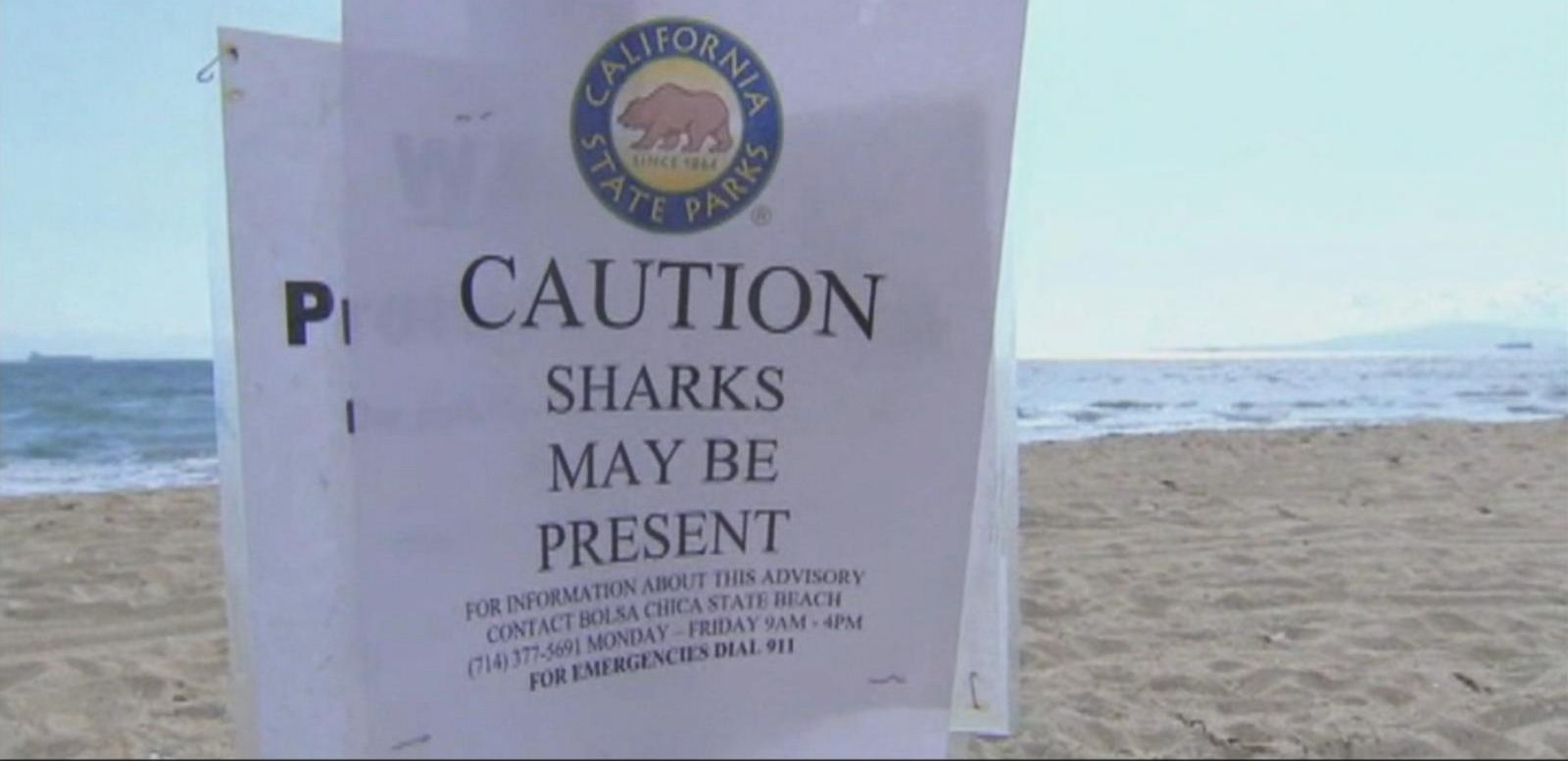 VIDEO: North Carolina Beachgoers Worried About Recent Shark Attacks