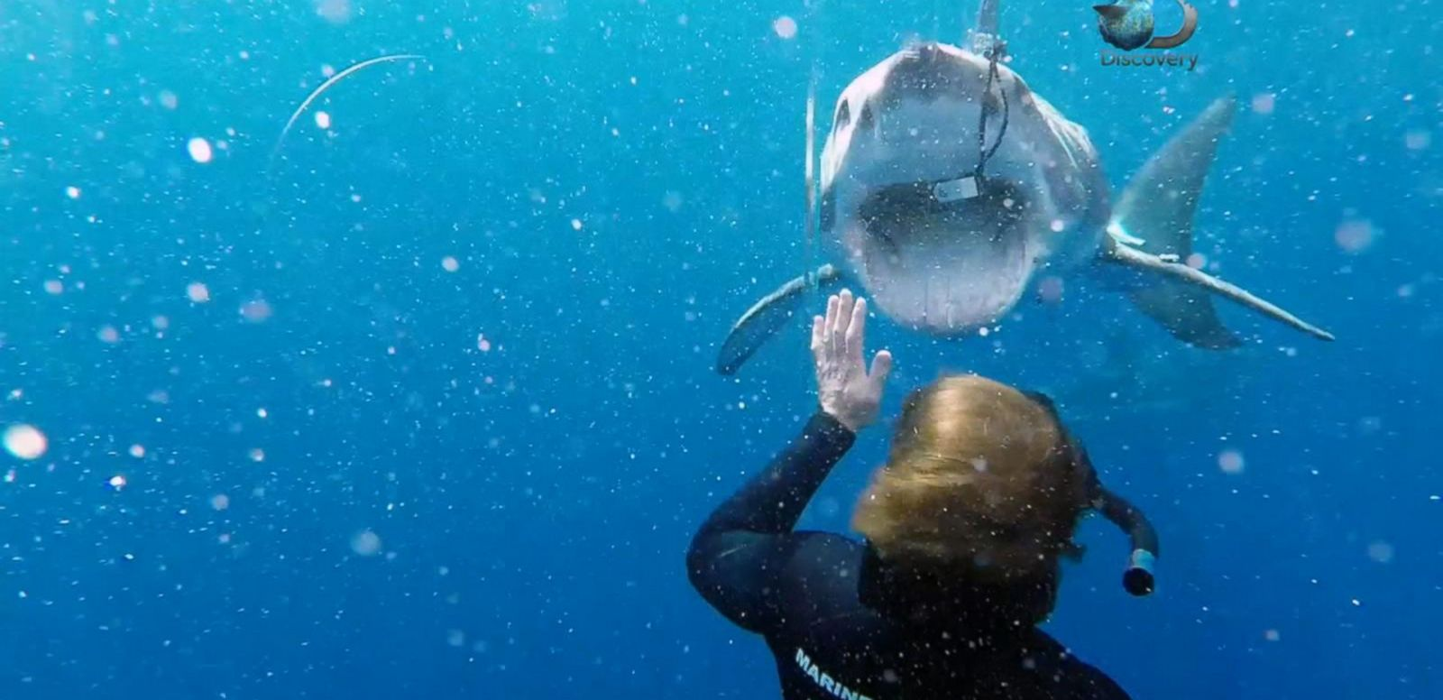 VIDEO: Tracking the World's Fastest Shark