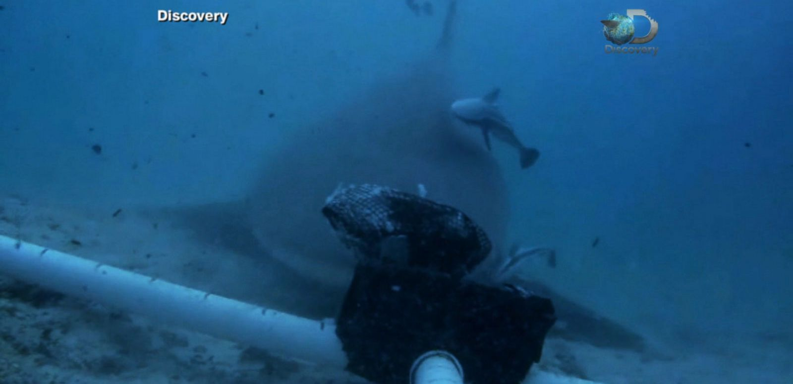VIDEO: Scientists Develop Experimental 'Electric Fence for Sharks'