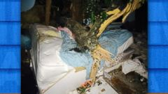 VIDEO: NY Woman Survives After Tree Smashes Through Home