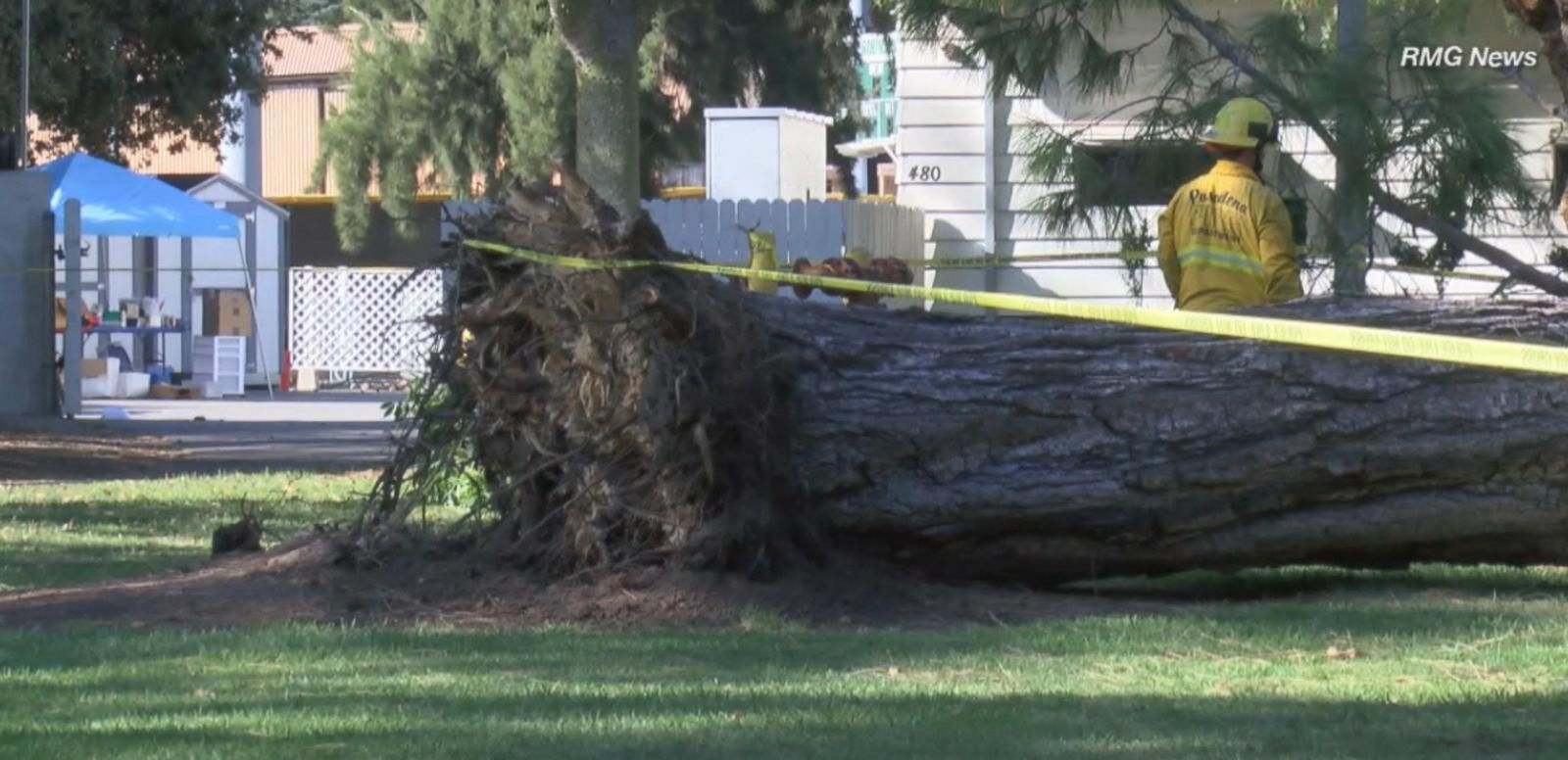VIDEO: Kidspace Museum Visitors Injured After Tree Collapses