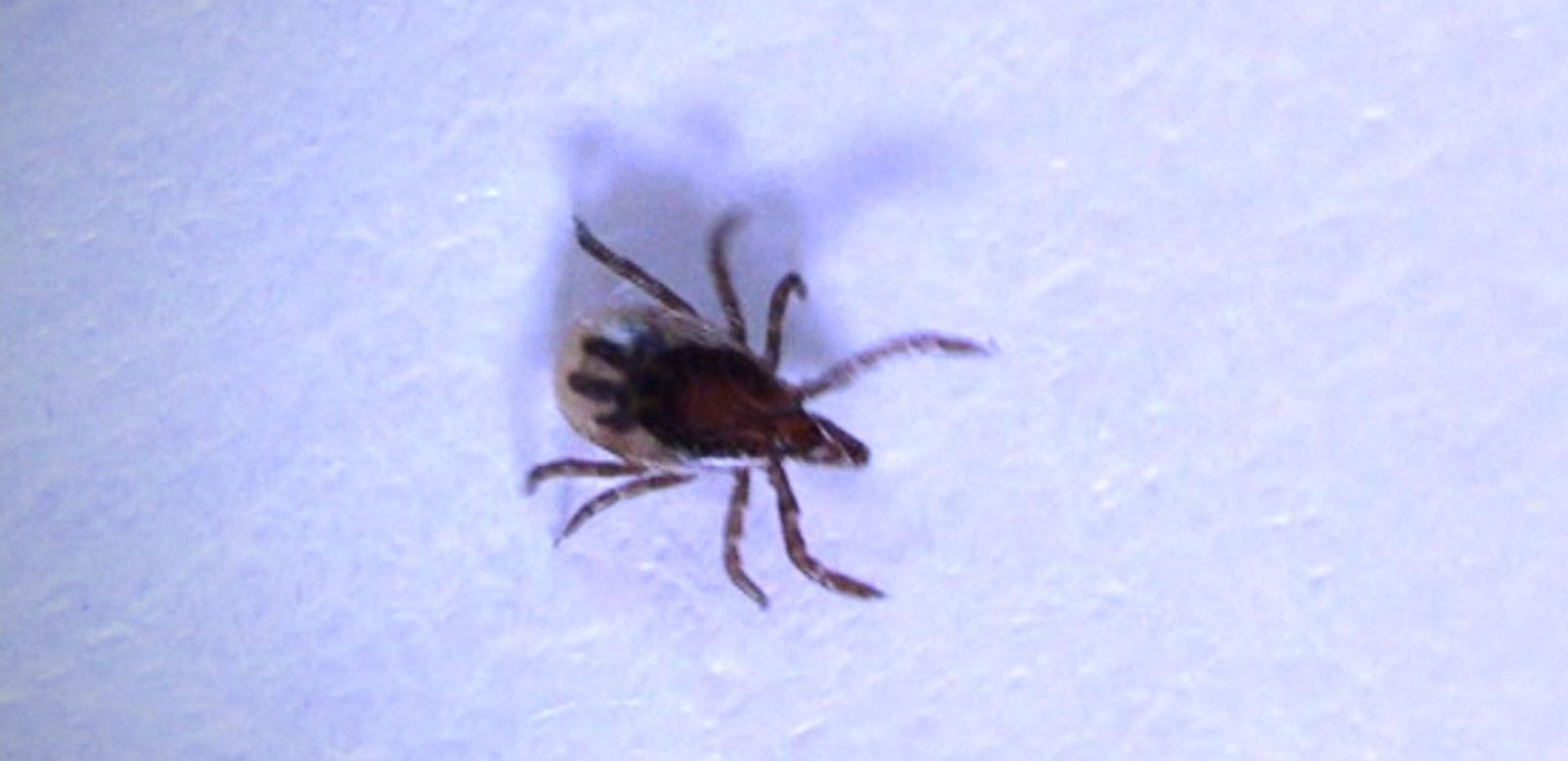 VIDEO: How Parents Can Protect Kids From Ticks