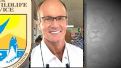 VIDEO: Is the Minnesota Dentist Who Killed Beloved Lion in Hiding?