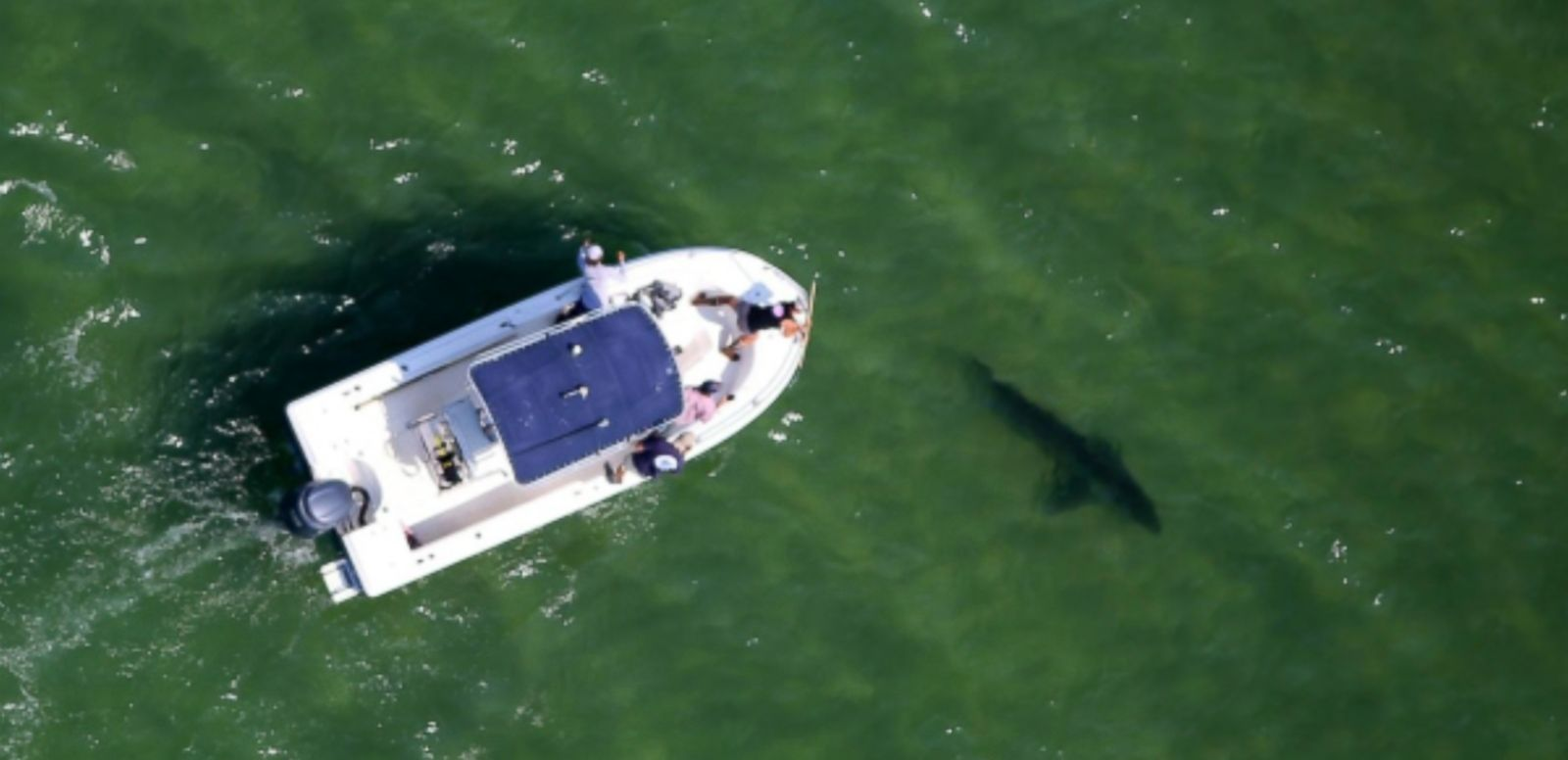 VIDEO: Aerial photos of the sharks were captures by the Atlantic White Shark Conservancy, which is conducting a 5-year study of Great Whites in the Cape Cod area.