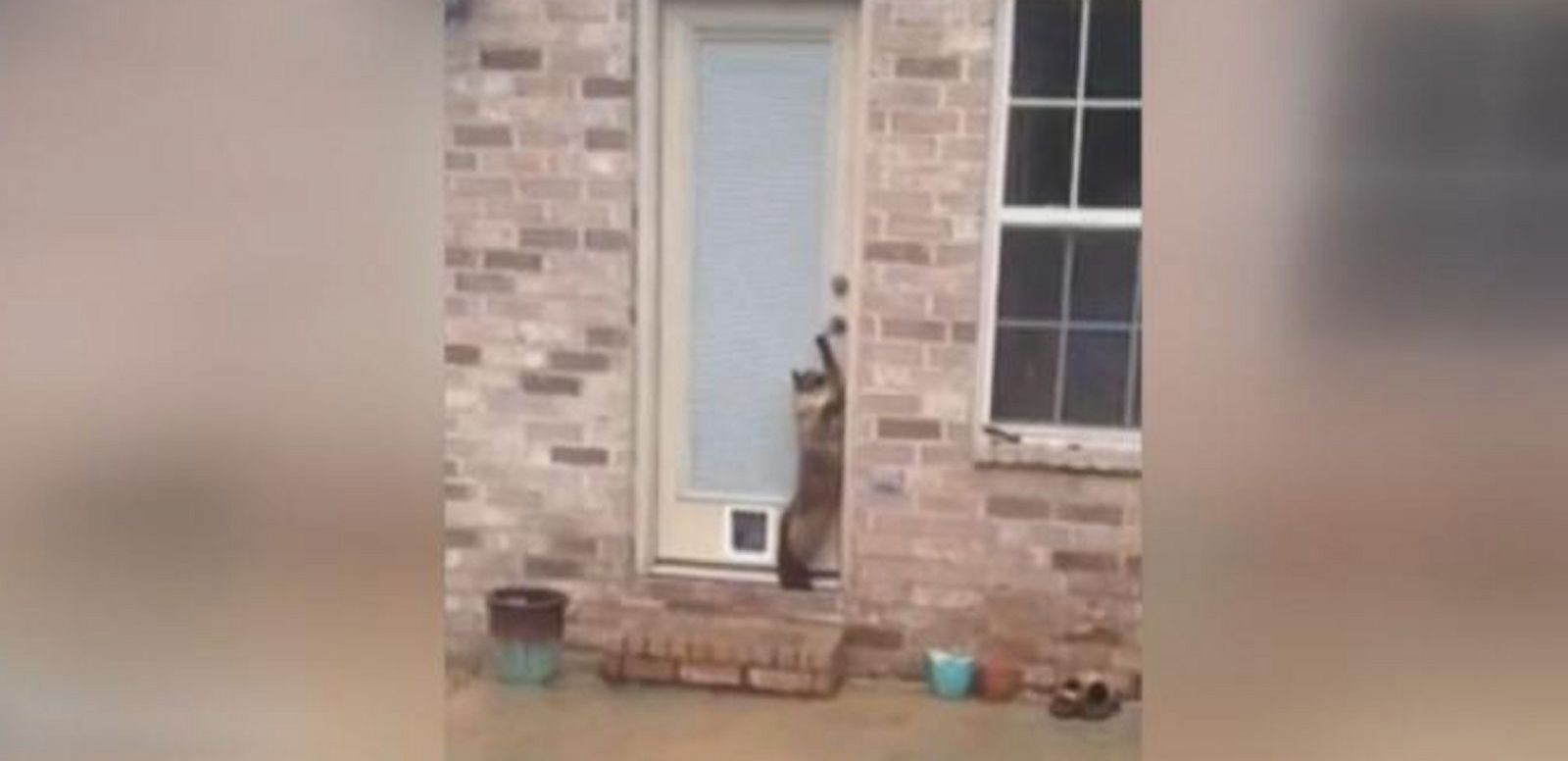 VIDEO: Clever Cat Outsmarts Owner in Viral Video