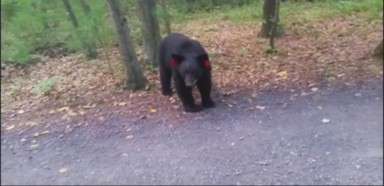 VIDEO: Connecticut Hiker's Close Encounter With a Pair of Black Bears