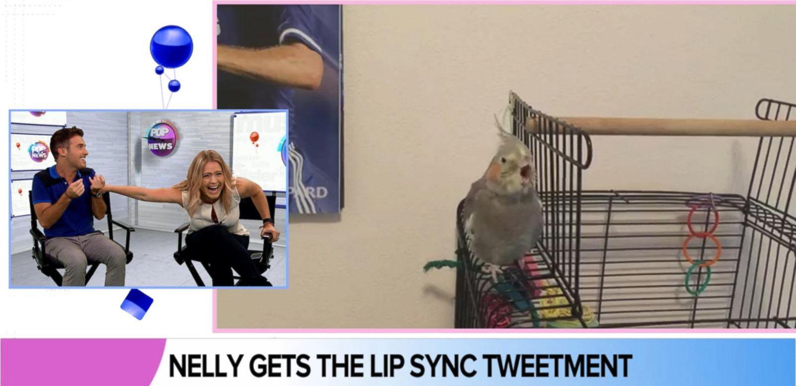 VIDEO: Bird Lip Syncs Nelly's 'Dilemma'