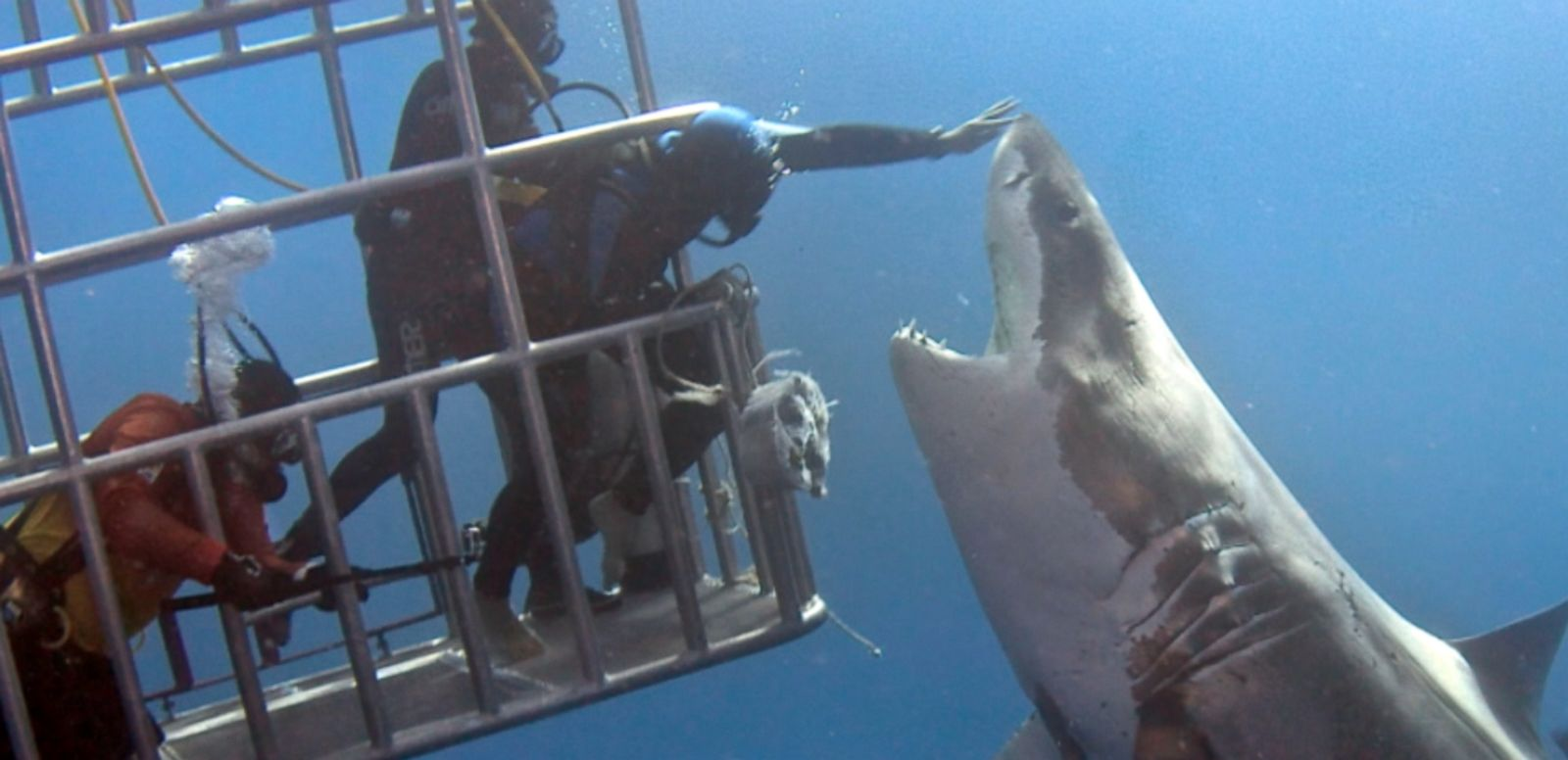 VIDEO: A diver in Mexico leaned out of a cage to pat the shark on its nose.