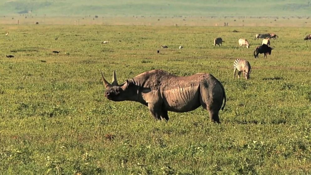 VIDEO: GMA on Safari: How Drones Are Helping Stop Poachers