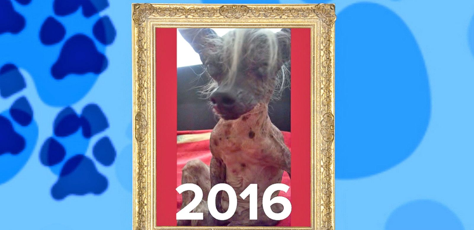 VIDEO: 2016 Ugliest Dog Competition Winner Announced