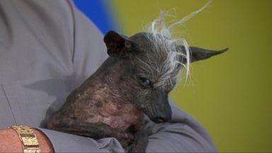 VIDEO: Meet the 2016 Worlds Ugliest Dog