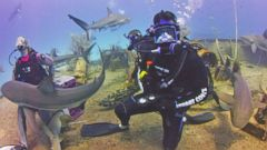 VIDEO: Shark Week: Jesse Palmer Swims With Sharks
