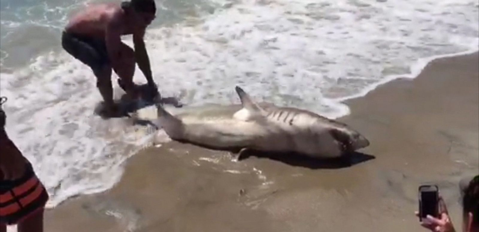 New jersey teen reels in estimated 200 pound shark abc news for Shark fishing nj