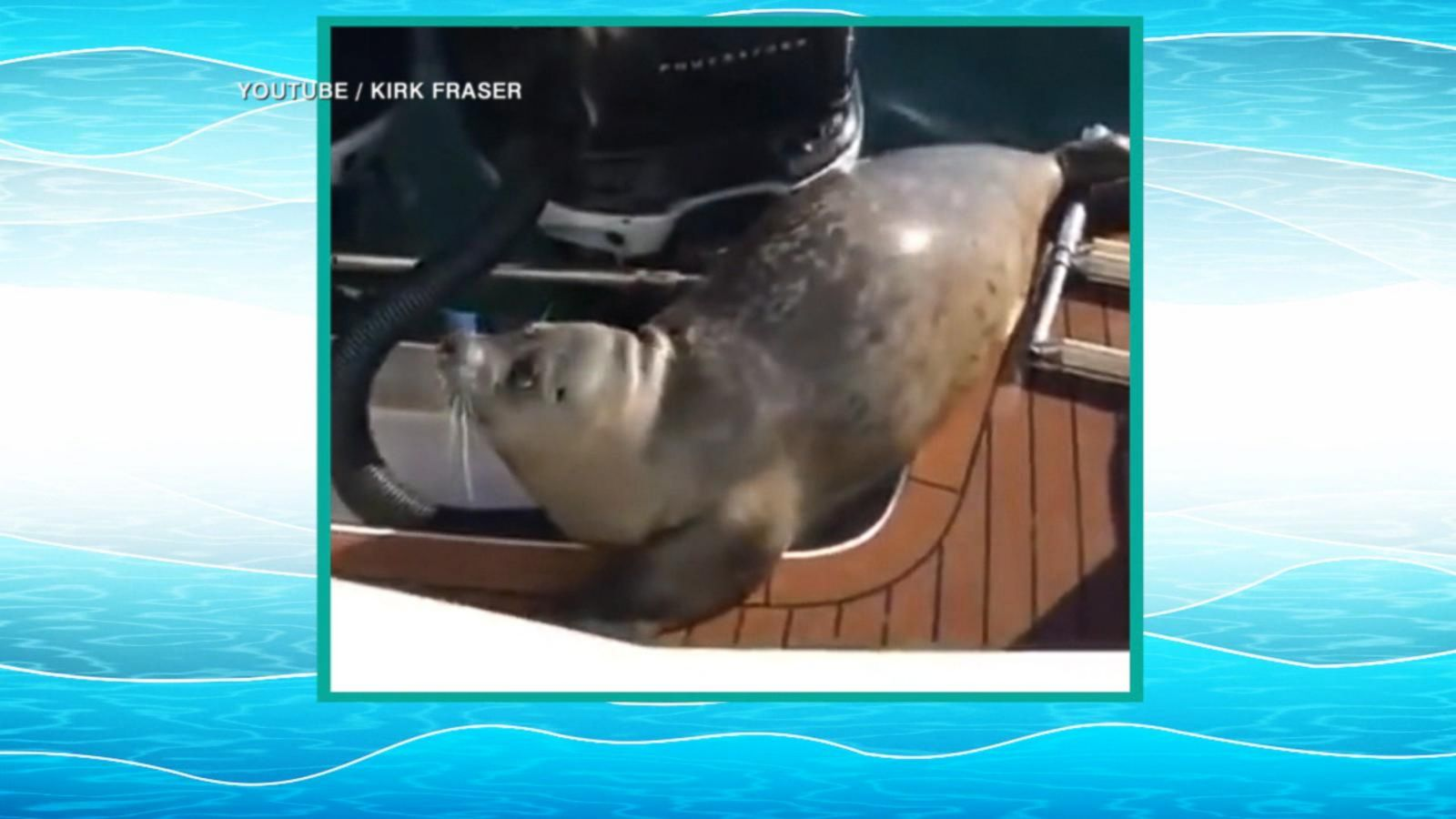 VIDEO: Seal Hops on Boat to Escape Killer Whales