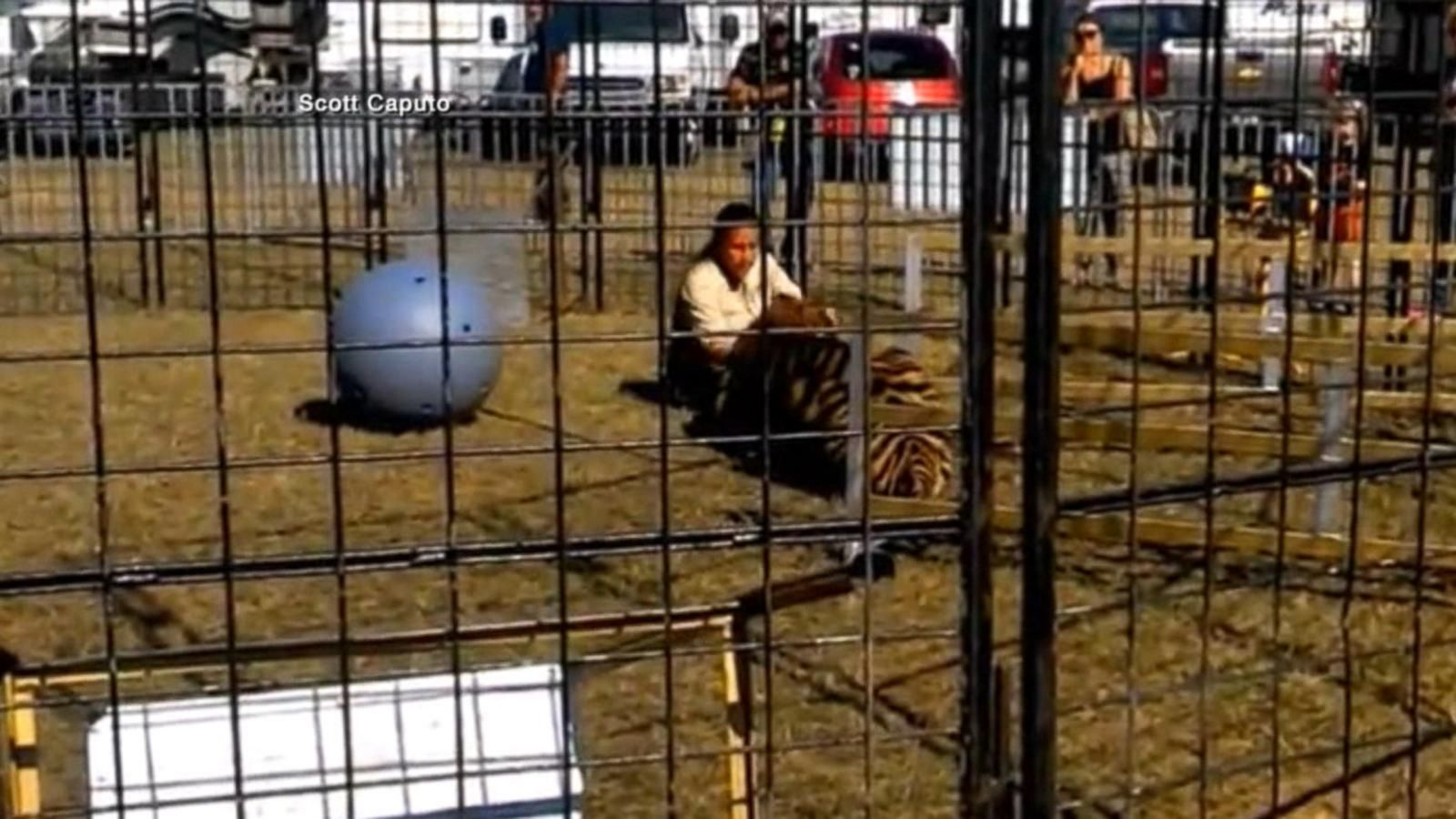 VIDEO: Tiger Attacks Animal Trainer at Florida Fair