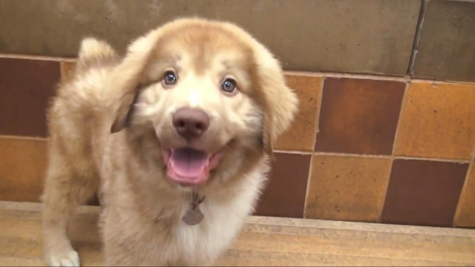 VIDEO: 'Mission PAWsible' Pet Adopt-a-Thon