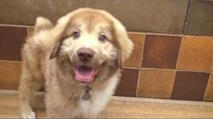 VIDEO: Mission PAWsible Pet Adopt-a-Thon