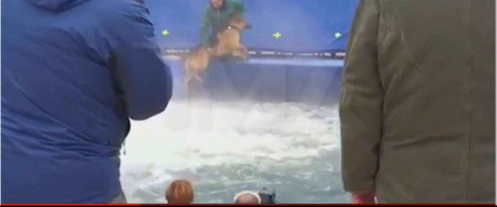 VIDEO: Dog's Treatment on Film Set Sparks Outrage