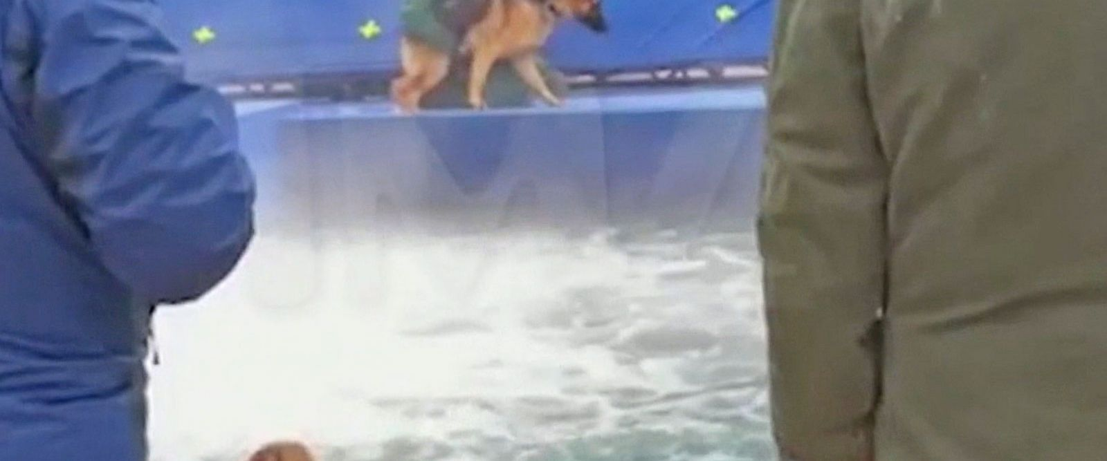 VIDEO: Leaked Footage From 'A Dog's Purpose' Film Set Leads to Canceled Premiere