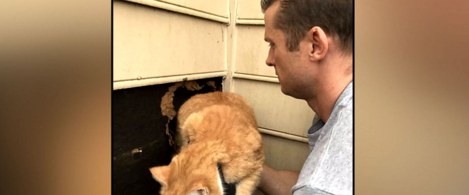VIDEO: North Carolina cat rescued from inside chimney