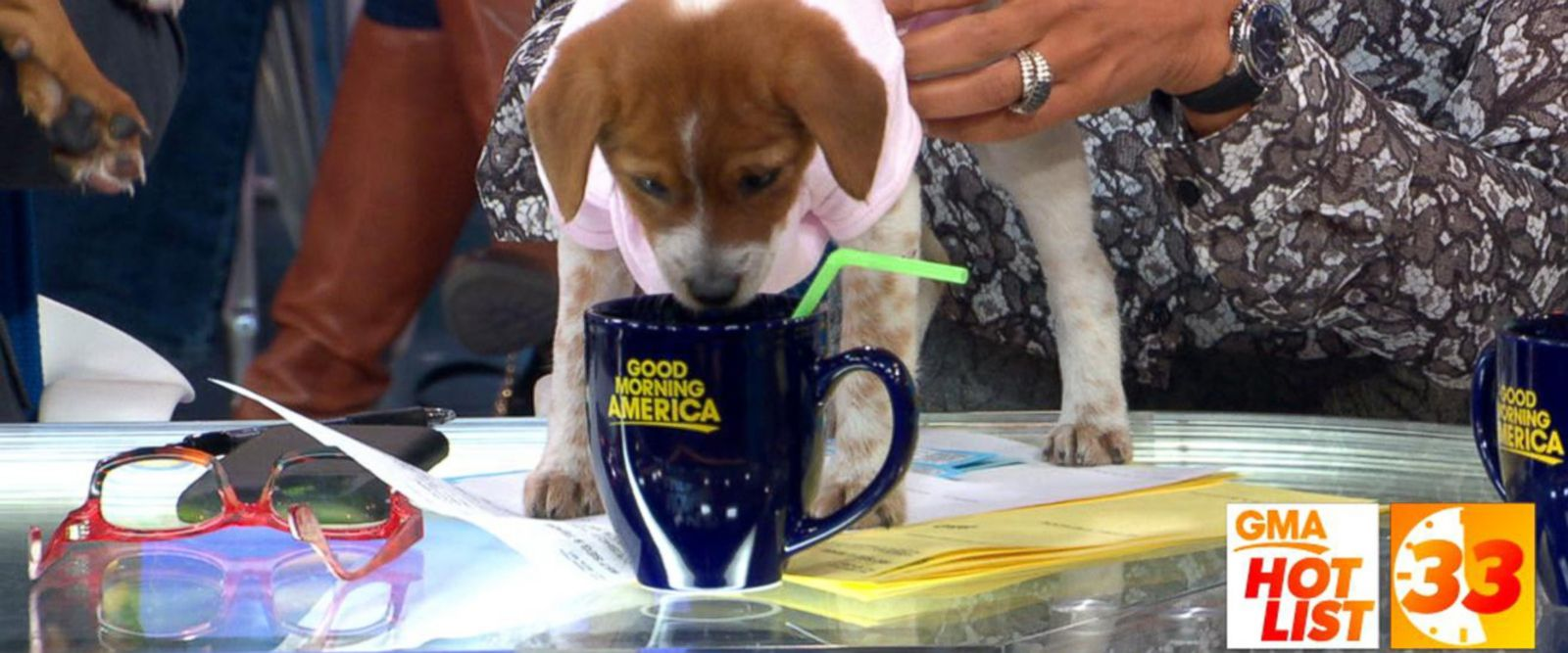 VIDEO: 'GMA' Hot List: The anchors celebrate National Puppy Day