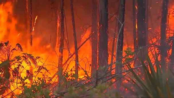 VIDEO: Dangerous Florida wildfires cause hundreds to evacuate