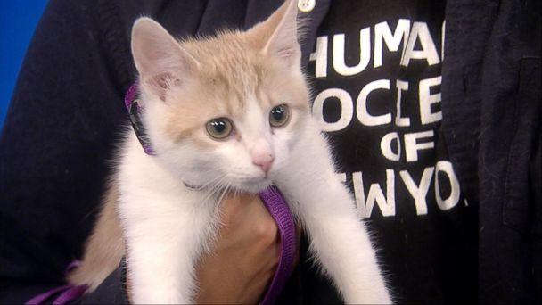 VIDEO: PetSmart's national pet-adoption weekend